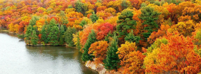 fall-autumn-forest-facebook-timeline-cover